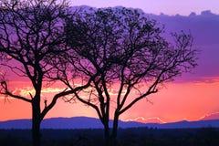 Заход солнца Kruger Стоковые Фото