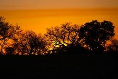 Заход солнца Kruger Стоковая Фотография