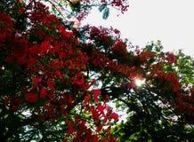 заход солнца malinche Стоковая Фотография RF