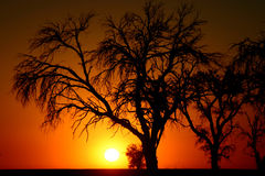 заход солнца namib пустыни Стоковое Изображение