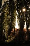 Заход солнца Patagonic Стоковые Фото