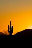 заход солнца saguaro кактуса Стоковая Фотография RF