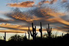 заход солнца saguaro Стоковые Изображения RF