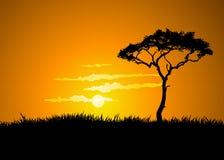 заход солнца savana иллюстрация вектора