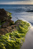 заход солнца seaweed sarasota пляжа Стоковая Фотография
