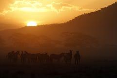 заход солнца serengeti ii стоковое фото