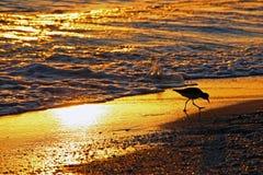 заход солнца shorebird стоковая фотография rf
