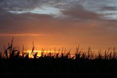 заход солнца silhouetted полем стоковые фото