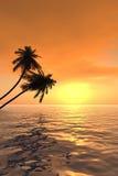 заход солнца v ладони Стоковые Изображения RF
