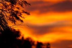 заход солнца Африки Стоковые Изображения RF
