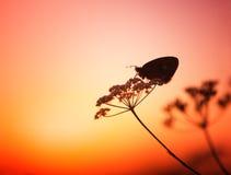 заход солнца бабочки Стоковое Изображение