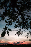 заход солнца Боливии pampas Стоковое Изображение