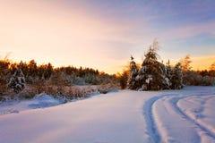 Заход солнца в поле зимы Стоковое Изображение