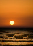 заход солнца лабиринта изгороди Стоковая Фотография