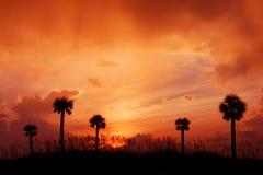 заход солнца ладони Стоковые Фото
