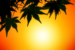 заход солнца листьев осени Стоковые Фото