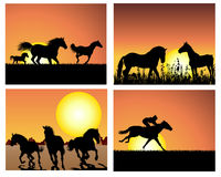 заход солнца лошади предпосылок установленный Стоковое Фото