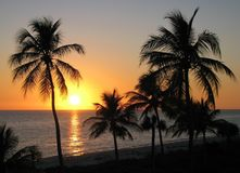 Заход солнца над морем и пальмами Стоковые Фото
