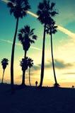 Заход солнца пляжа Венеция Стоковое Изображение