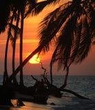заход солнца пляжа карибский романтичный тропический Стоковая Фотография RF
