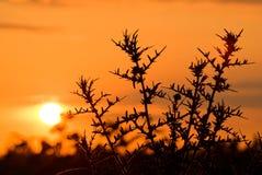 заход солнца поля Стоковое Изображение