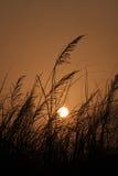 заход солнца 03 Стоковые Изображения RF