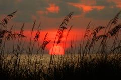 заход солнца seaoat Стоковое фото RF