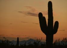 Заход солнца Аризоны с силуэтом кактуса и горы saguaro Стоковое фото RF