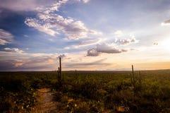 Заход солнца Аризоны стоковые фотографии rf
