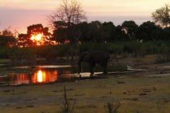 Заход солнца африканских слонов на канале Savuti Стоковые Изображения RF