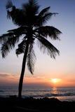 заход солнца ладони пляжа Стоковые Фото