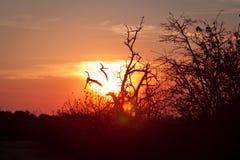 Заход солнца Ботсваны стоковые изображения rf