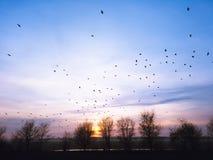 Заход солнца весны с кукушками в небе Стоковая Фотография