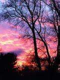 Заход солнца весны Стоковая Фотография RF