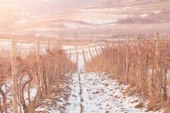 Заход солнца виноградника зимы Стоковые Изображения