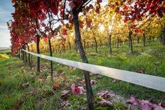 Заход солнца виноградника Стоковые Изображения
