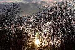 Заход солнца внутри он лес Стоковая Фотография