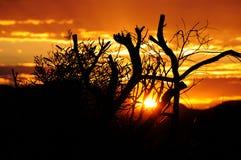 Заход солнца в Австралии Стоковое фото RF