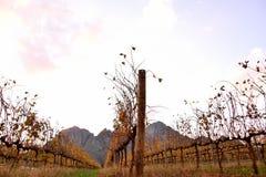 Заход солнца в винограднике горы Стоковые Изображения