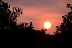 Заход солнца в деревьях Стоковое Фото