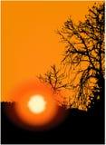 Заход солнца в деревьях иллюстрация штока