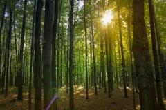 Заход солнца в лесе ольшаника Стоковые Фото