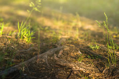 Заход солнца в лесе, след восхода солнца, природа, предпосылка Стоковые Фото