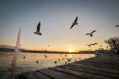 Заход солнца в Женеве, Швейцарии Стоковое Фото