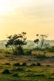Заход солнца в джунглях, национальный парк Chitwan, Непал стоковые фотографии rf