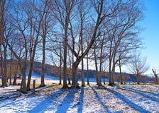 Заход солнца в зимнем лесе на холмах снега Стоковые Изображения