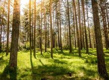Заход солнца в красивом лесе в Zlatibor Стоковое фото RF