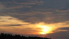 Заход солнца в красных цветах деревьев Стоковая Фотография RF