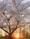 Заход солнца в марте Стоковые Фотографии RF