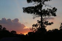 Заход солнца в Мелроузе, Флориде Стоковое Изображение RF